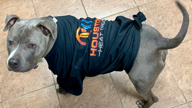 Meet Dozer the Houston Heat Treat Mascot